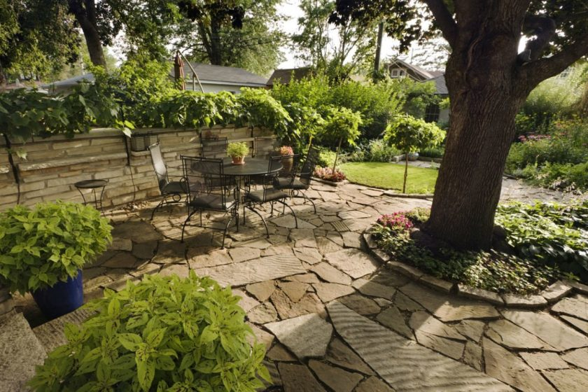 How to get rid of trees in order to improve the appearance of your landscape