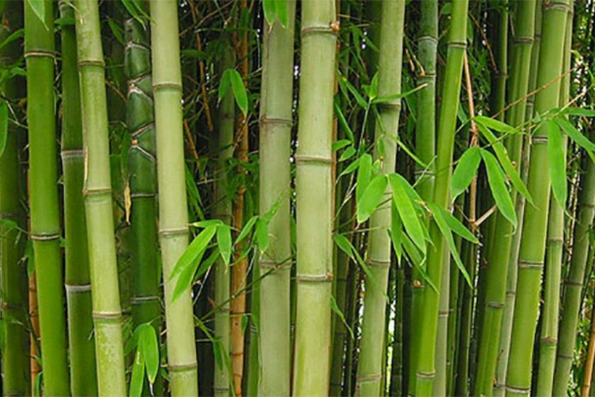 Have you ever used bamboo poles?